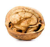 Walnut half isolated on the white background — Foto Stock