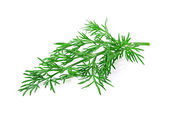 Dill herb isolated on white background — Foto Stock