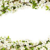 Sfondo fiori di apple — Foto Stock