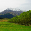 New Zealand landscape - Stock Photo