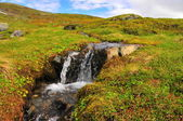 Creek in tundra — Stock Photo