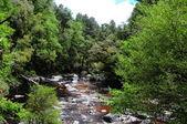 ποταμός στο τροπικό δάσος — Φωτογραφία Αρχείου