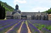 Abbaye de Senanque — Stock Photo