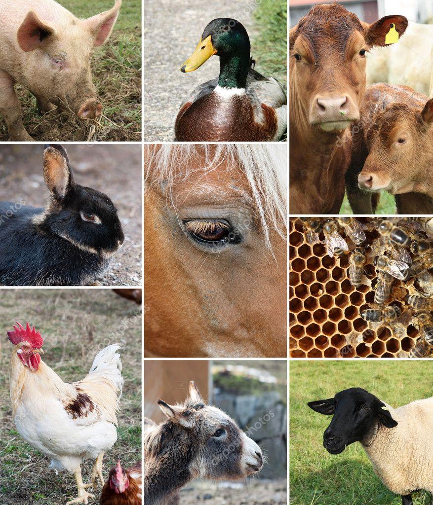 农场动物的抽象拼贴画