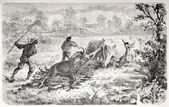 Return from wildebeest hunting — Stock Photo