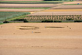 Crop circles — Stock Photo