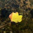 Floating Autumn Leaf — Stock Photo