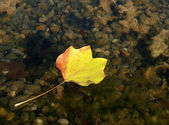 秋の葉をフローティング — ストック写真