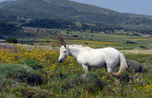 White Horse in the field — Stock Photo