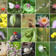 Biodiversity collage — Stock Photo
