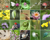 Biodiversität-collage — Stockfoto