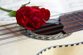 Red rose on Charango — Stock Photo