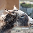 Farm animal - donkey — Stockfoto