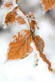 Folha de inverno com geada — Foto Stock