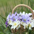 Basket of wild spring flowers — Stock Photo