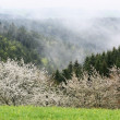 Stock Photo: Valley after Spring Rain