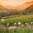 Sunset over vineyard valley — Stock Photo