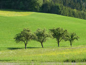 Four trees in a row in spring time — Stockfoto