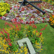 Flower Clock - Foto de Stock