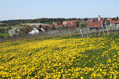 Country view in spring — Stock Photo