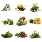 Mushroom collection — Stock Photo