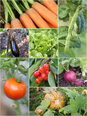 Homegrown garden products — Stock Photo