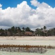Kelp farm at the Tanzania coast — Stock Photo