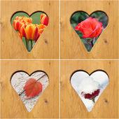 Bloemen van vier seizoen — Stockfoto