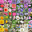 Spring flower collage — Stock Photo