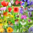 Abstract collage of spring flowers — Stock Photo