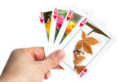 Hand holding a playing card showing winter leaf with frost — Stock Photo