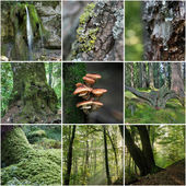 Forest Collage — Stock Photo