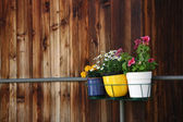 Three small pots of flowers hanging on balcony against old wooden wall — Stock Photo