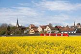 Um trem vermelho está a atravessar um campo de estupro a florescência — Fotografia Stock