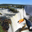 Giant toucbird in front of Iguazu waterfalls — Stock Photo #26448291