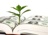 Leaf bud growing out of a book covered with dollars — Stock Photo