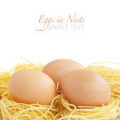 œufs dans les nids de nouilles — Photo