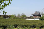 Village in China - tea plantation outside a village temple — Stock Photo