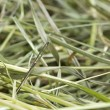 Needle in a hay stack — Stock Photo