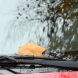 Fallen autumn leaves on car windshield — Stock Photo