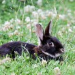 Little rabbit in the flowering meadow — Stock Photo