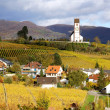 Vine yard region, Klettgau, Schaffhausen, Switzerland — Stock Photo