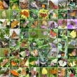 Butterfly collage — Stock Photo #40481919