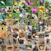 Wildlife collage — Stock Photo