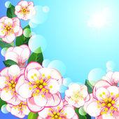 Apple blossom — Stock Vector