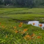 Постер, плакат: Tiger Lilies and Wetland