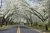 Spring Road — Stock Photo