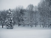Quiet Forest — Stock fotografie