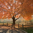 Autumn Glory — Stock Photo