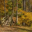 "Stock Photo: ""Footbridge in Woods"""